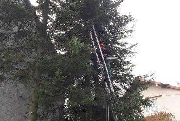 Wycinka drzew przy remizie OSP